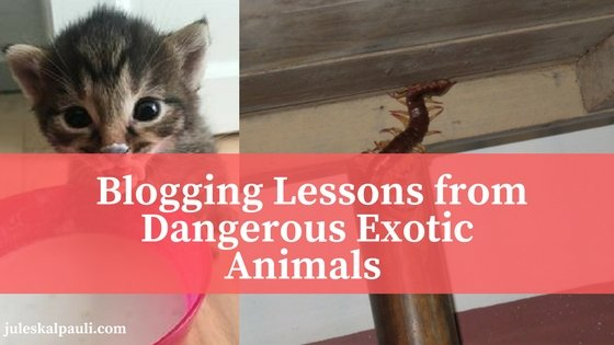 6 Blogging Lessons I Learned from Exotic Dangerous Animals I Battled.